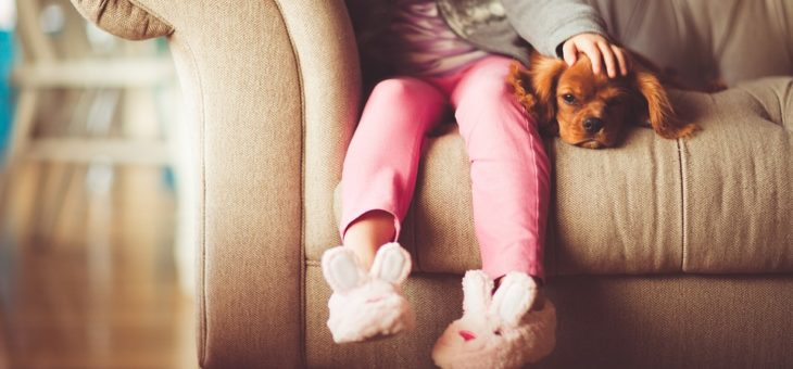 Mordeduras de perro Recomendaciones y formas de prevención